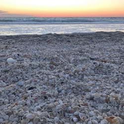 A picture of Shells on the beach at sunset on Captiva Island
