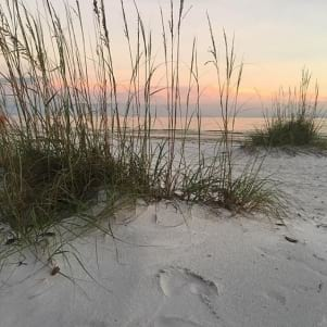 A picture of Sea Oats and sand dunes on Fort Myers beach, Florida