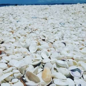 More shells than you can imagine on Sanibel Island