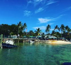 A photo of a clear water, a dock and coconut trees in Islamorada