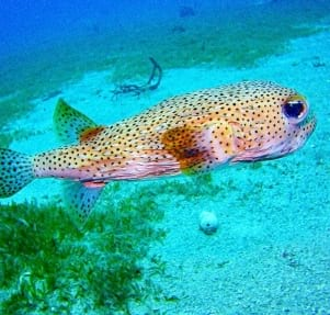 Amazing image of a fish in Statia.