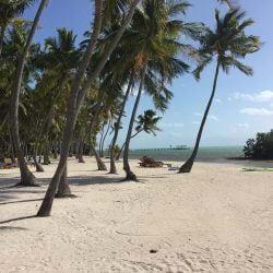 A photo of coconut trees on the sandy beach at The Moorings on Islamorada in the Florida Keys.