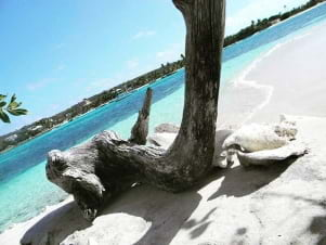 Weathered driftwood on the  beaches of Anguilla