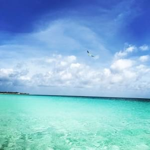 The beauty of Barbuda.