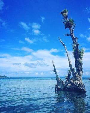 The water and the sky looks amazing in Bocas del Toro.