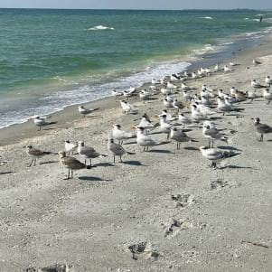 Seagulls at the beach in Captiva.