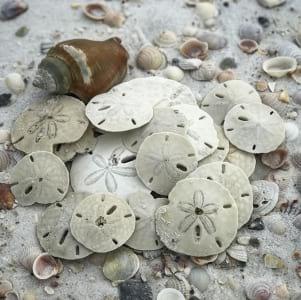 Dollar days at Crooked Island