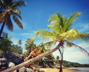 Coconut climbing in Guyane.