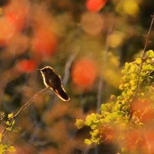 Humming Bird in Bonaire.