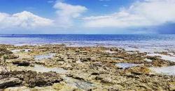Rocky beach in Islamorada, the Florida Keys