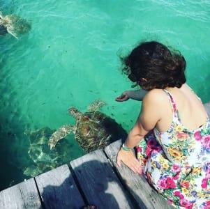 Feeding the turtles in Isla Mujeres.
