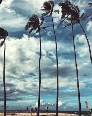 Palm trees in Maui