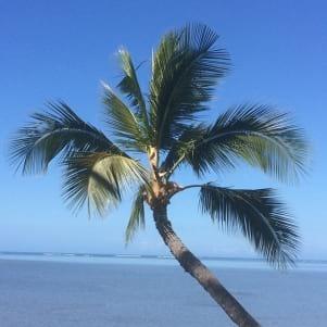 Coconut tree overlooking the beach in Molokai Hawaii