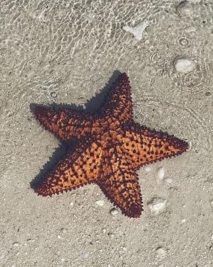 Closeup shot of a starfish
