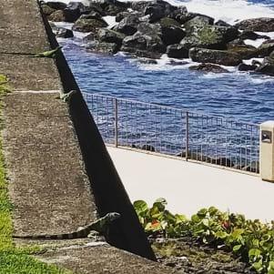 Cool lizard shot in Puerto Rico