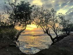 A picture of a Sunset through the trees in St. Lucia!