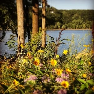 Missing the wild flowers on St. Croix.